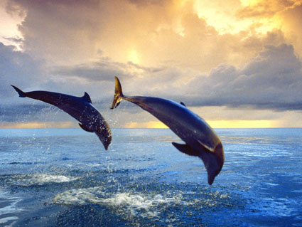 Flying Dolphins