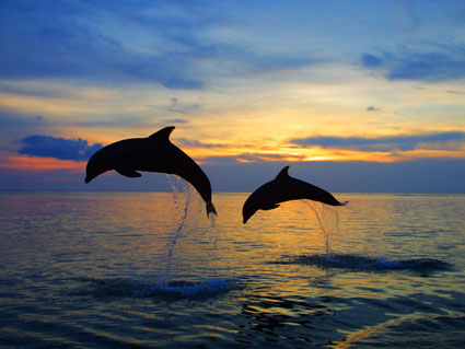 Flying Dolphins at Sunrise